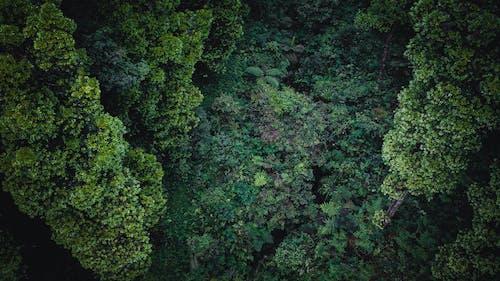 Fotos de stock gratuitas de agricultura, agua, al aire libre, amante de la naturaleza
