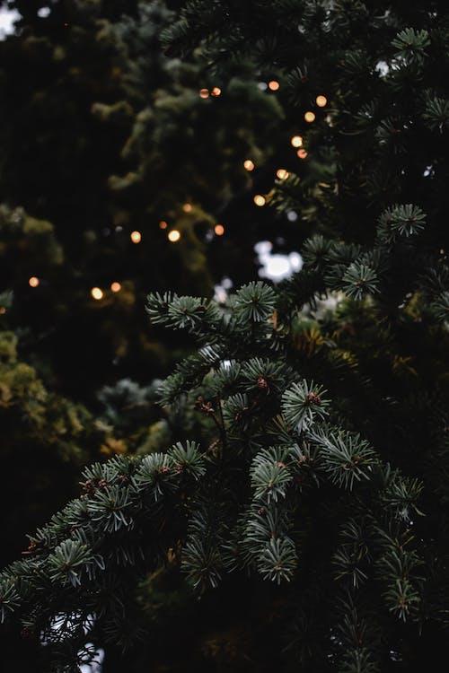 Foto d'estoc gratuïta de ambient nadalenc, arbre de Nadal, decoració nadalenca