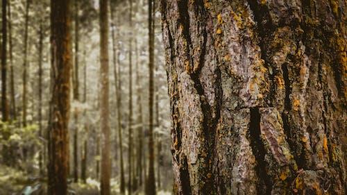 Fotos de stock gratuitas de amante de la naturaleza, bonito, bosque, descobrir a natureza