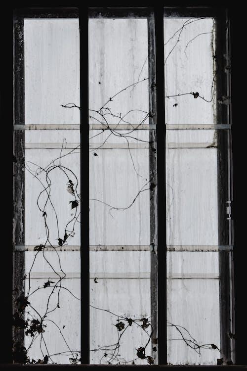 Fotobanka sbezplatnými fotkami na tému bary, budova, chladný