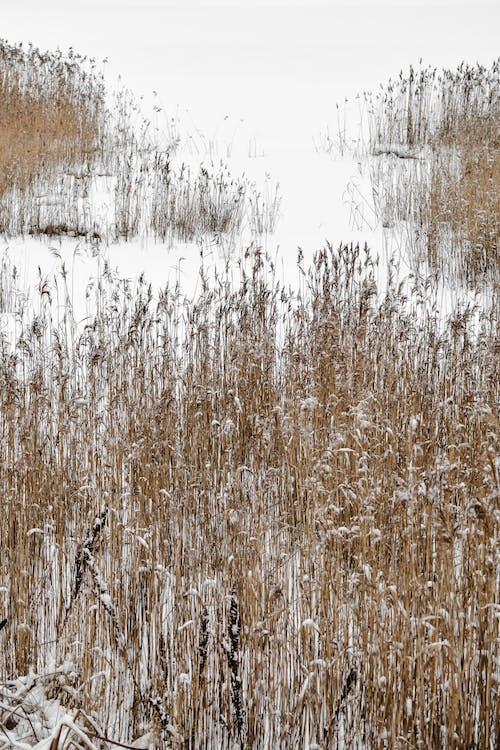 Brązowe Pole Trawy
