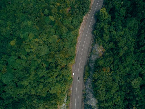 Breathtaking aerial view of cars driving on asphalt road running through lush woods with green trees in sunlight
