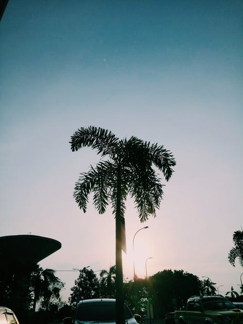 Free stock photo of palmtree, vsco