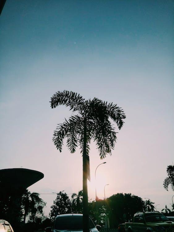 Foto stok gratis pohon palem, vsco