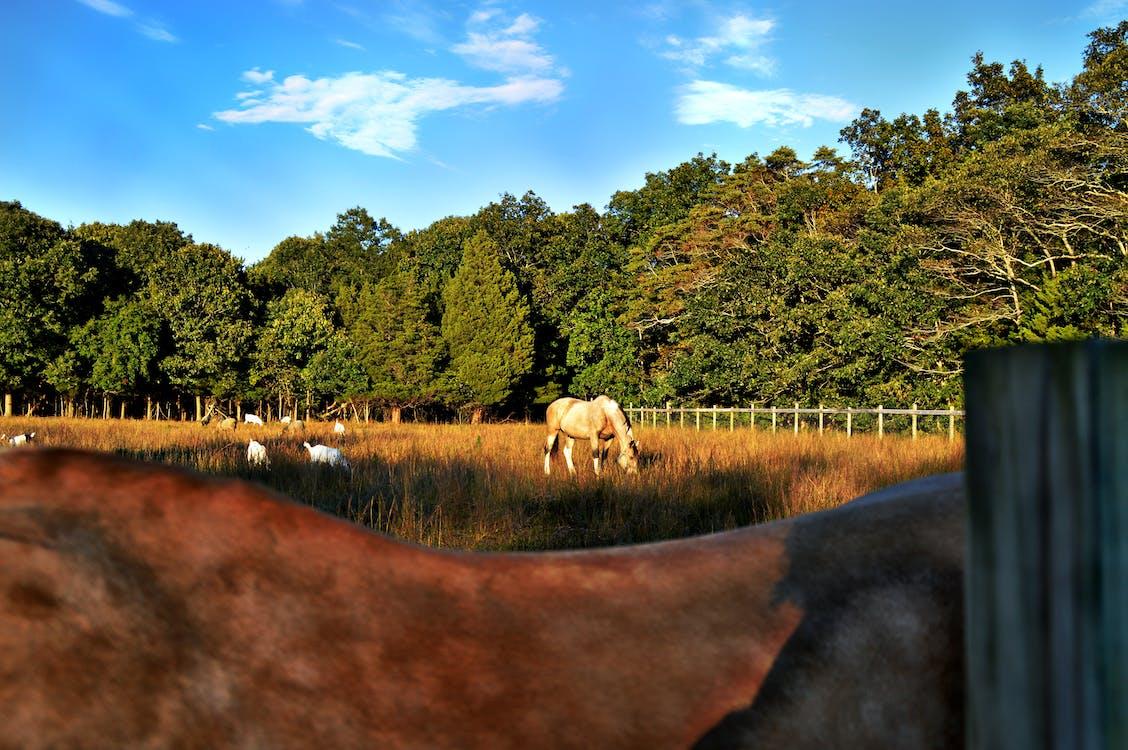 กลางแจ้ง, กั้นรั้ว, การเกษตร