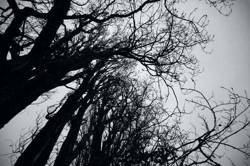 Bare trees growing under overcast sky
