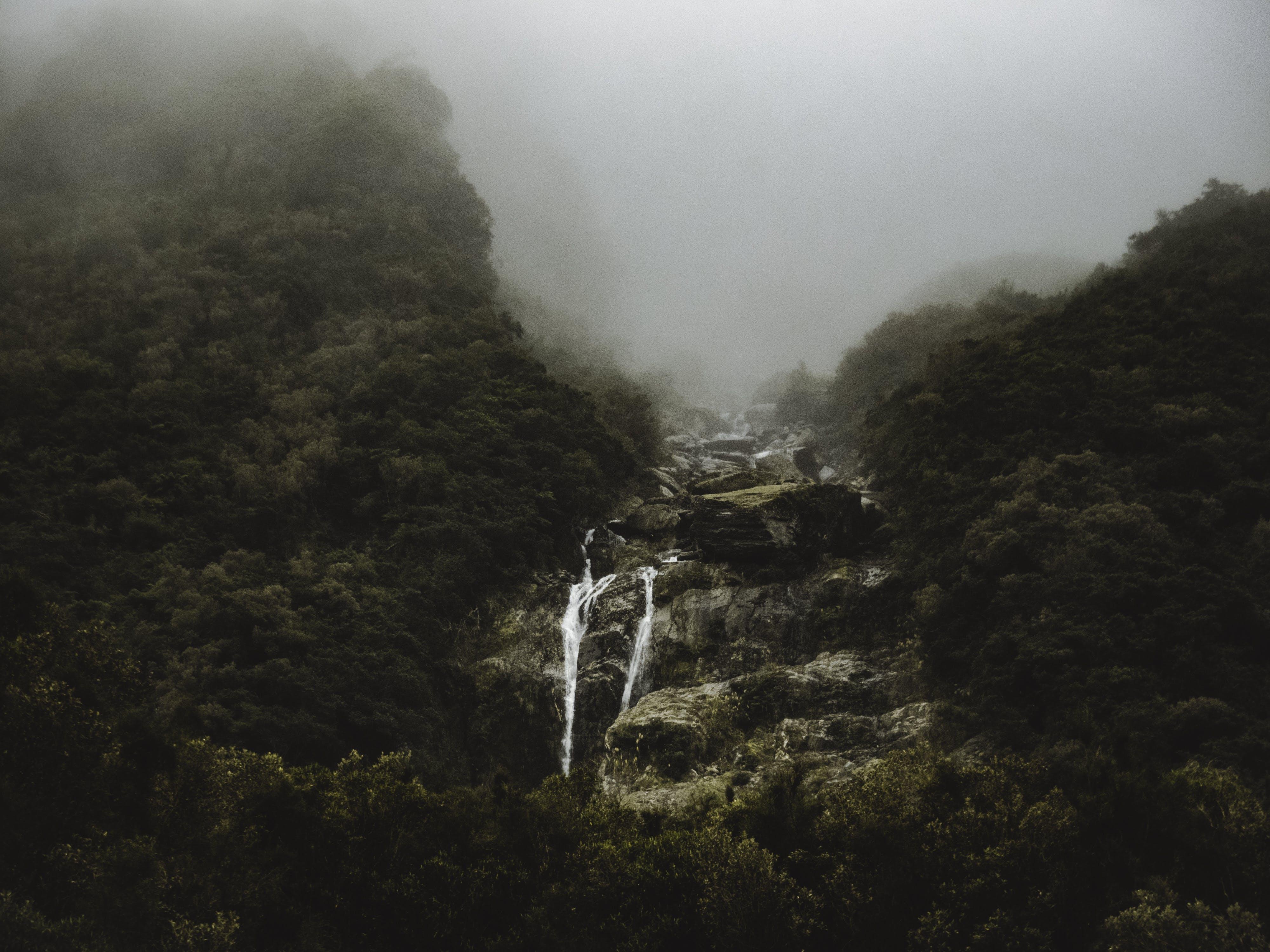 Fotos de stock gratuitas de acantilado, agua, alto, arboles