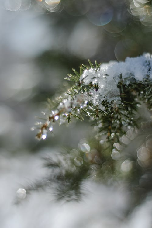 Selective Focus Photography of Snow Covered Tree