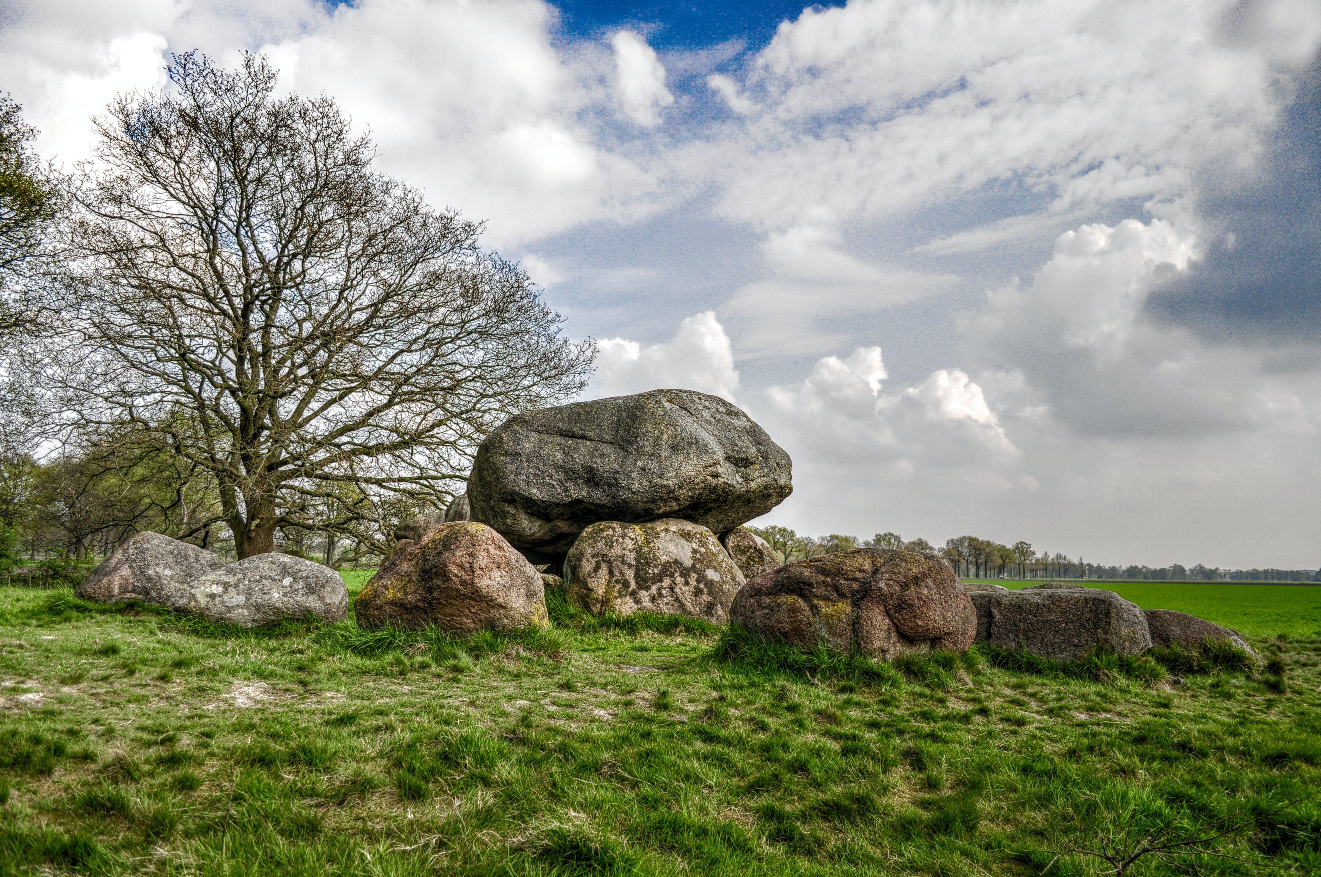 Brown Rocks Near Bare Tree