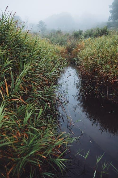 Green Grass Near River