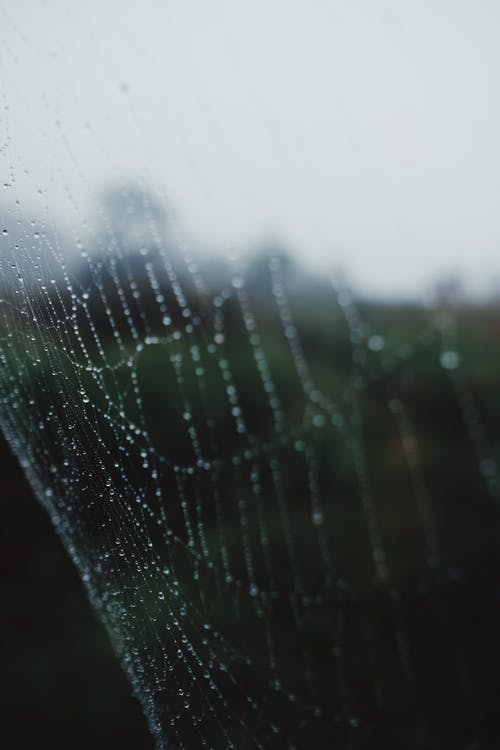 Water Droplets on Spider Web in Close Up Photography