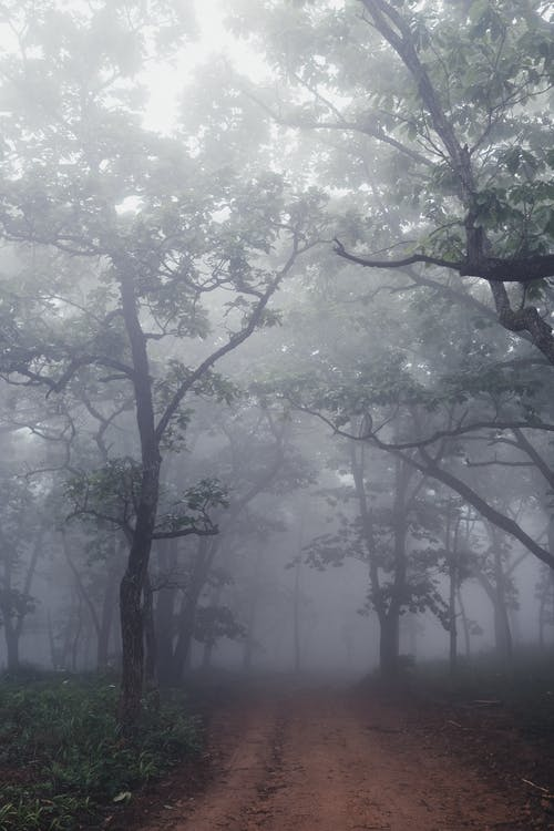 Green Tree With Fog