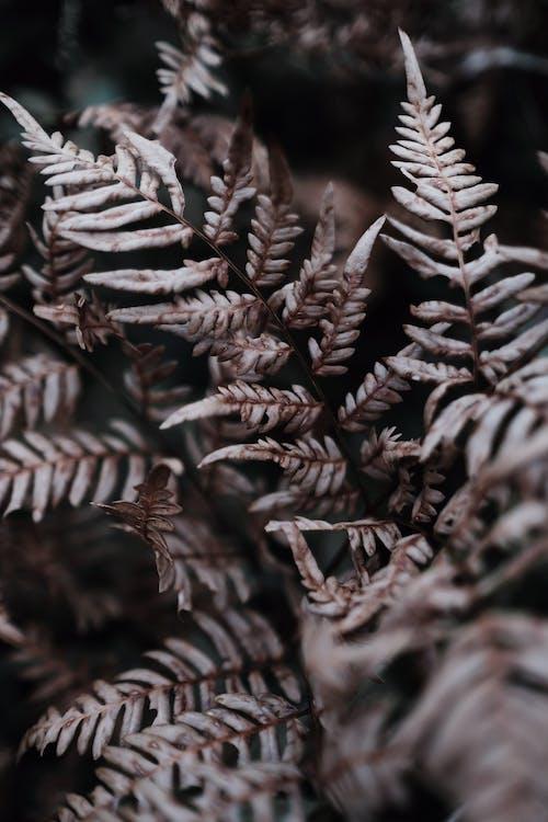 Бесплатное стоковое фото с абстрактный, дерево, зима, лист