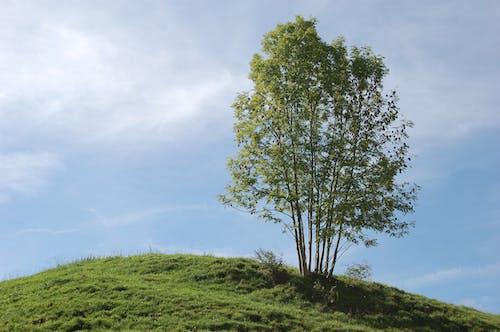 Безкоштовне стокове фото на тему «дерево»