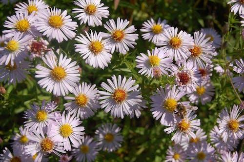 Безкоштовне стокове фото на тему «група квітів, квітка»