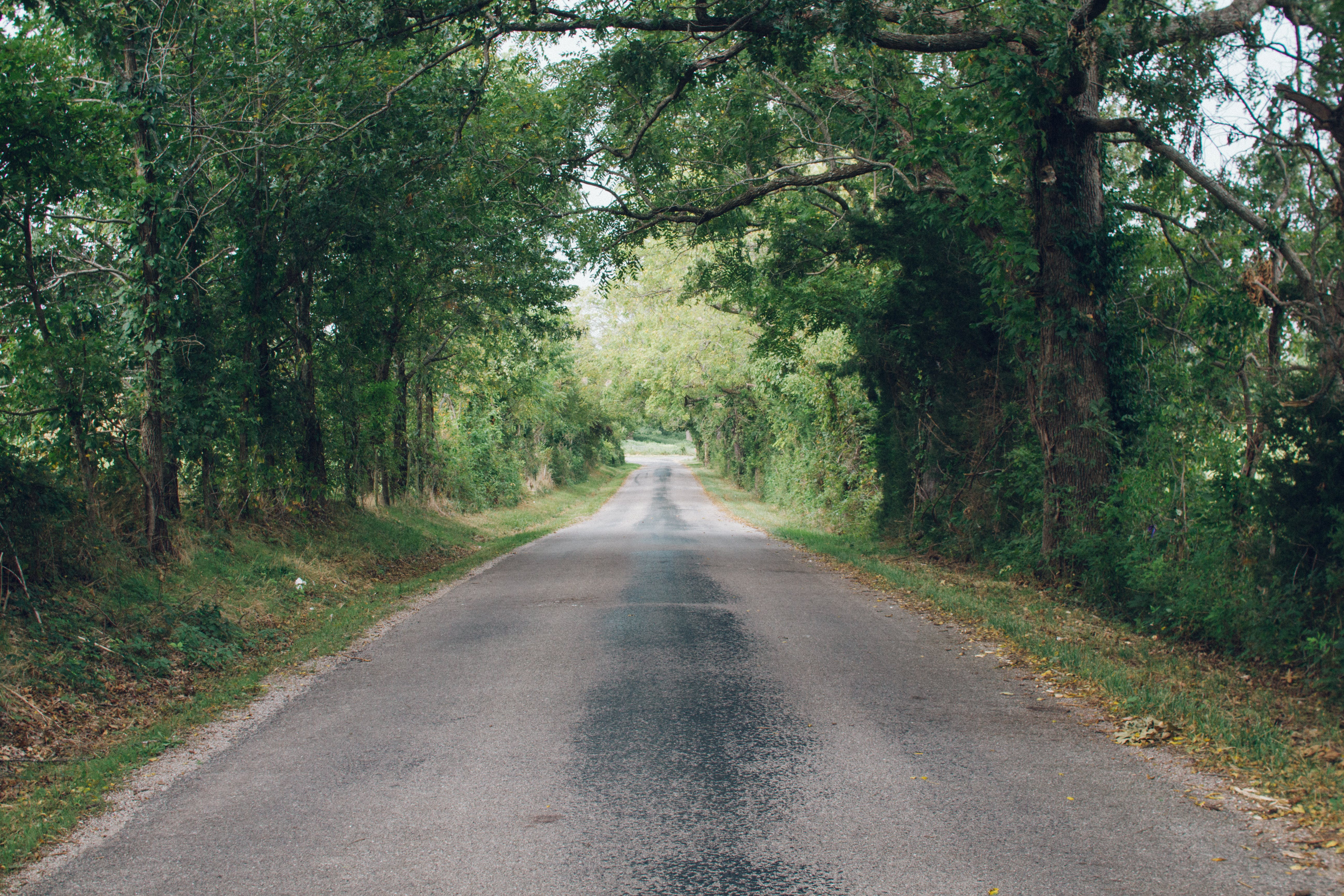 Gray Concrete Road Near Green Leafed Trees