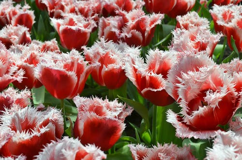 Foto profissional grátis de flor, flores, jardim, natureza