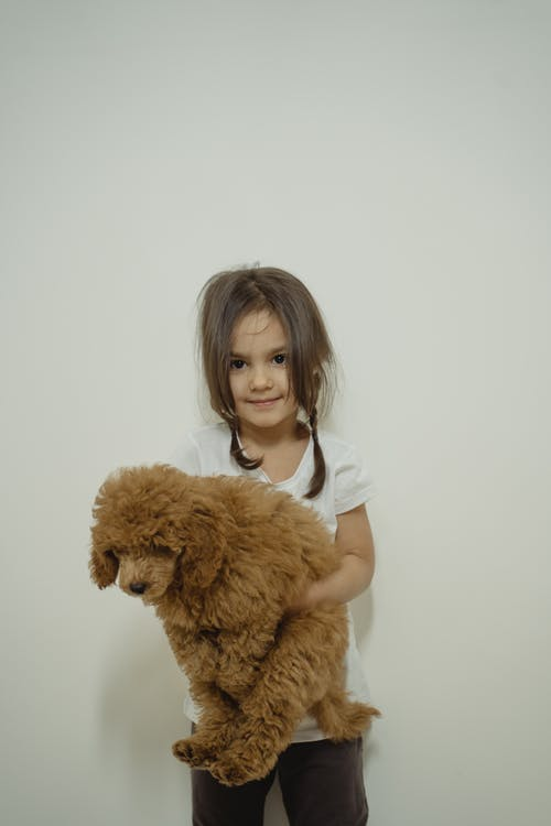 Girl in White T-shirt Holding Brown Long Coated Dog