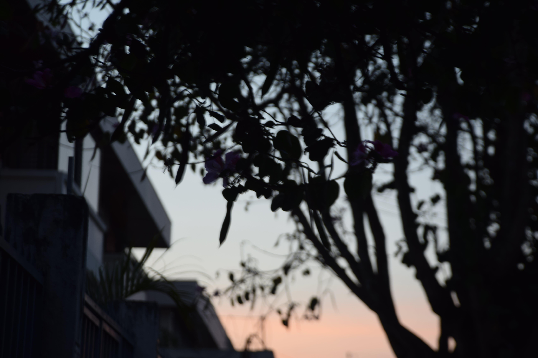 Free stock photo of tree, apartment, shadows, dusk