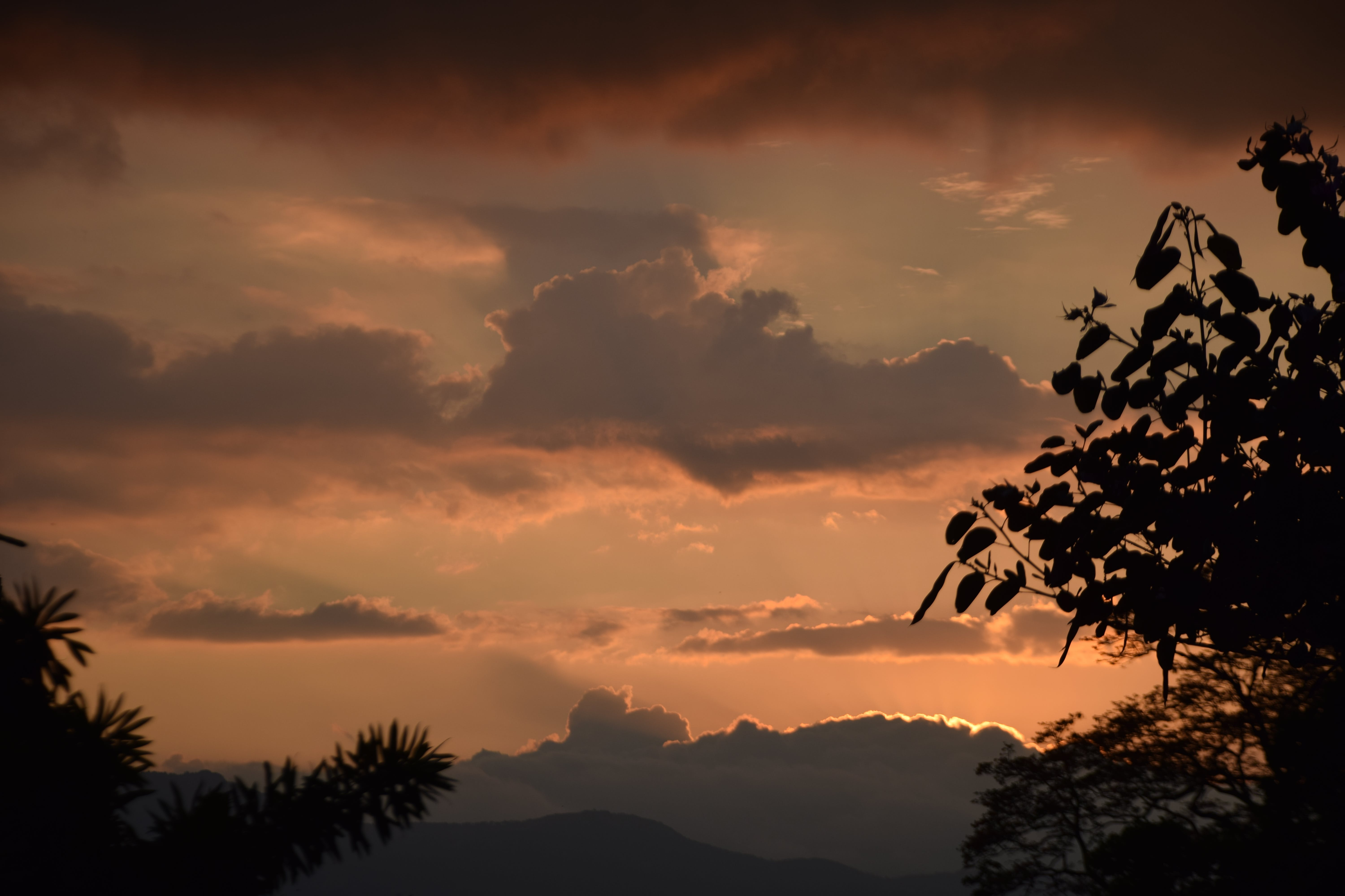 Free stock photo of sunset, clouds, twilight, leaves