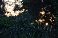 light, leaves, bokeh