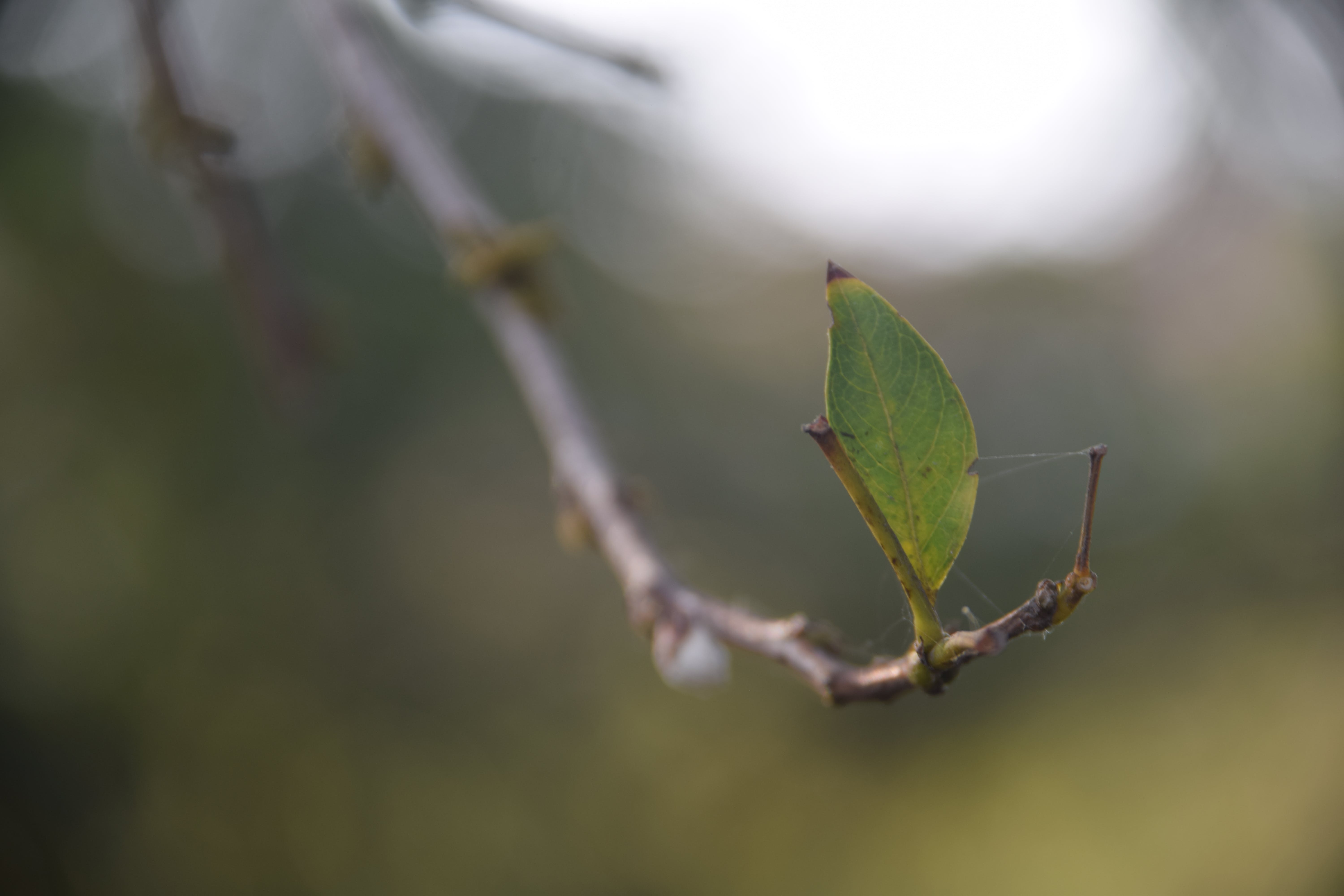 Free stock photo of outside, leaf, branch, outdoor
