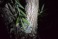 night, leaves, tree bark