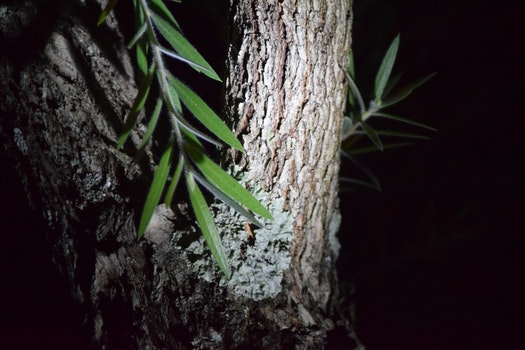 Free stock photo of night, leaves, tree bark, nocturnal