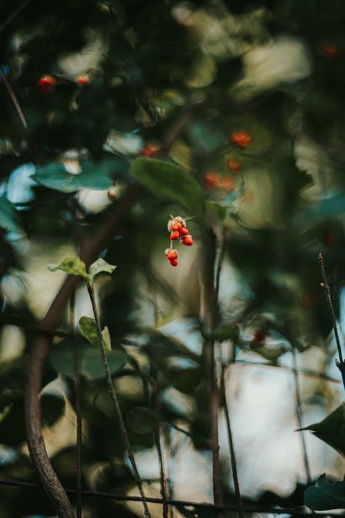 From below of small red berries growing on tree sprigs with green leaves in forest on blurred background in summer