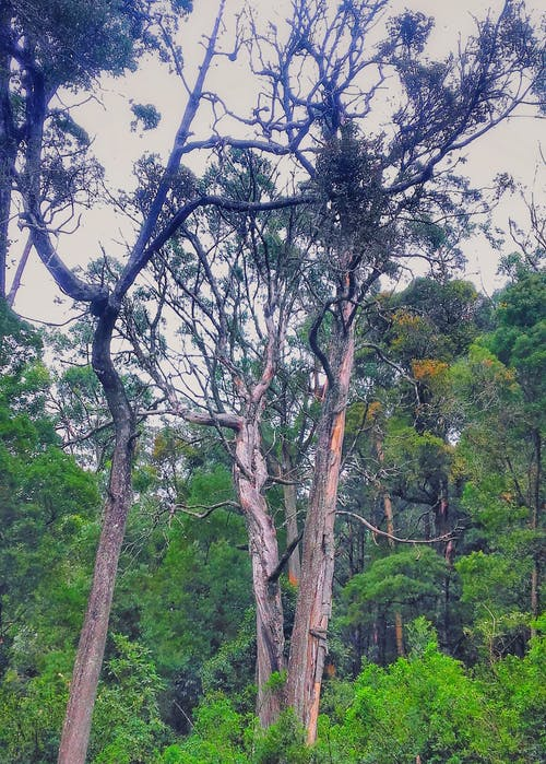 Free stock photo of green, rainforest, tree