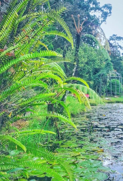 池塘, 綠色, 花園池塘, 雨林 的 免費圖庫相片