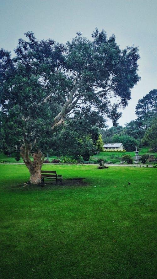 樹, 深綠色, 花園 的 免費圖庫相片