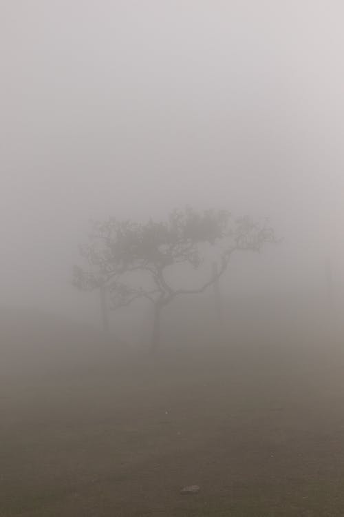 Leafless Tree Covered With Fog