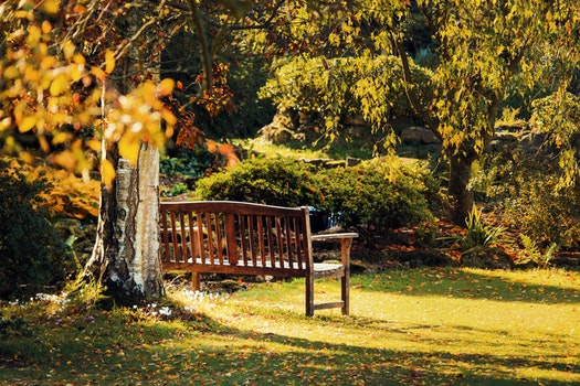 Free stock photo of bench, landscape, nature, garden