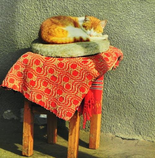 Free stock photo of cat, country, romania
