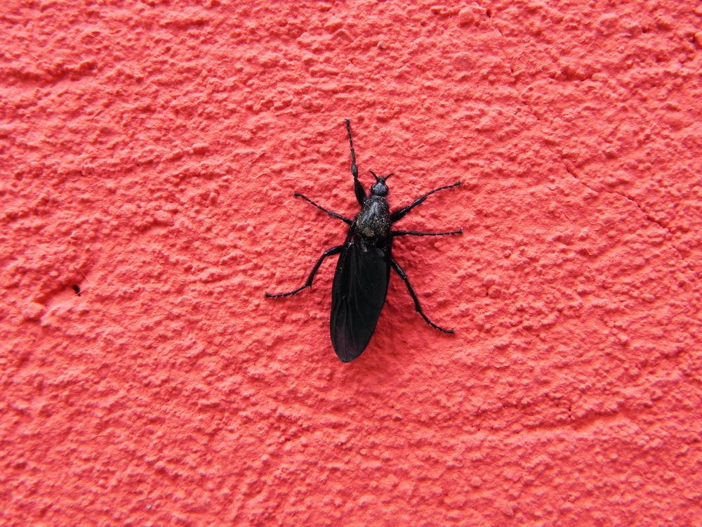 Free stock photo of bug, contrast, red bricks