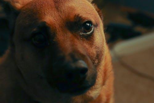 Free stock photo of dog, puppy