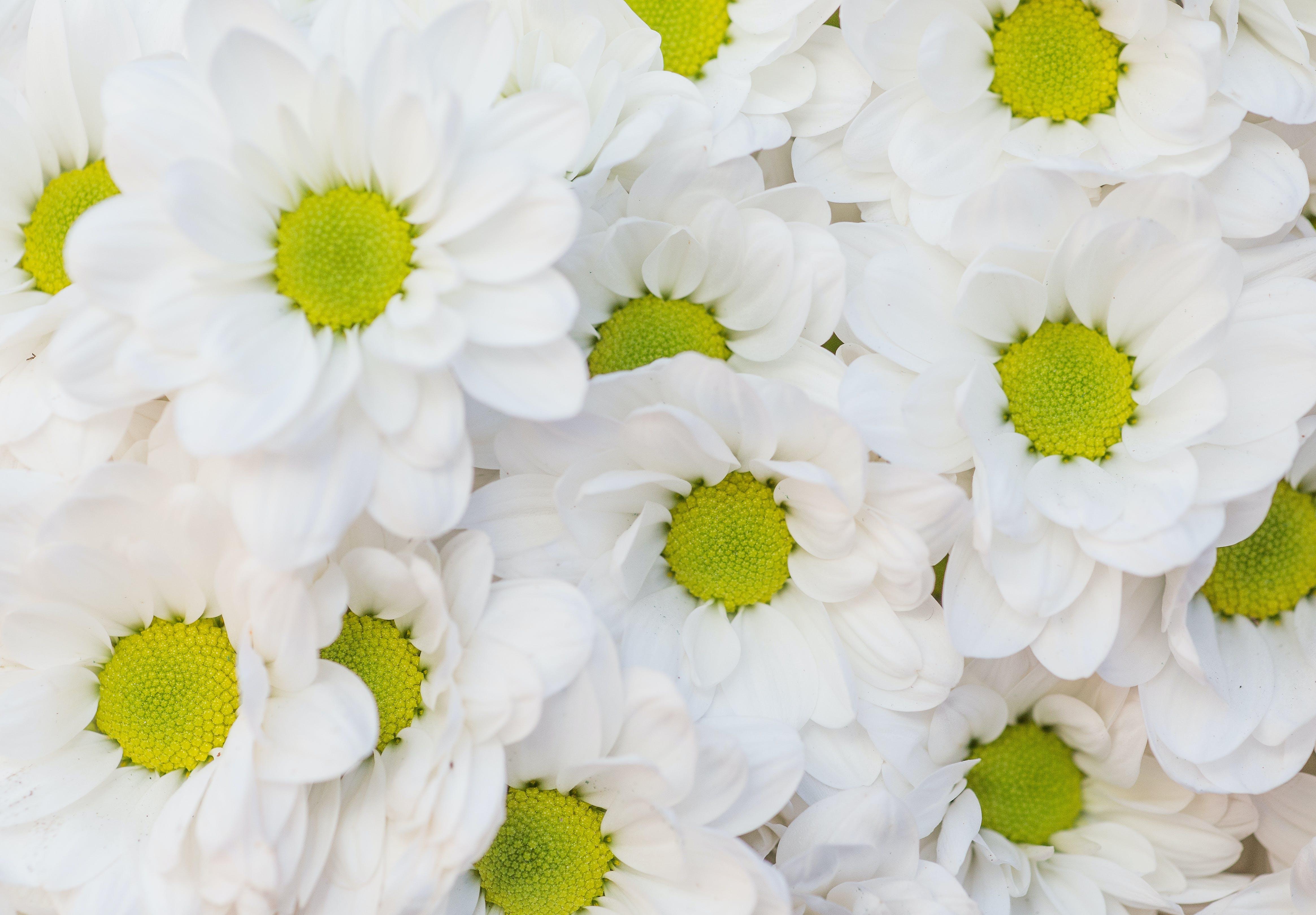 Free stock photo of flowers, petals, pollen, bloom