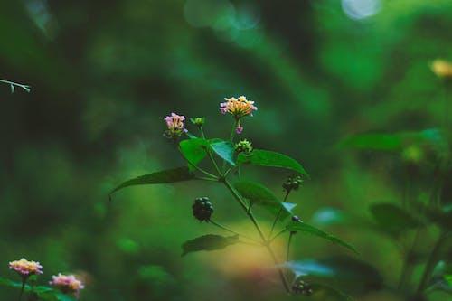 Free stock photo of beautiful, beautiful flowers, beauty in nature, close-up