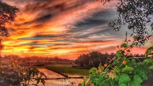 Základová fotografie zdarma na téma krásná obloha, mraky oblohy, tmavě zelené listy, zemědělské oblasti
