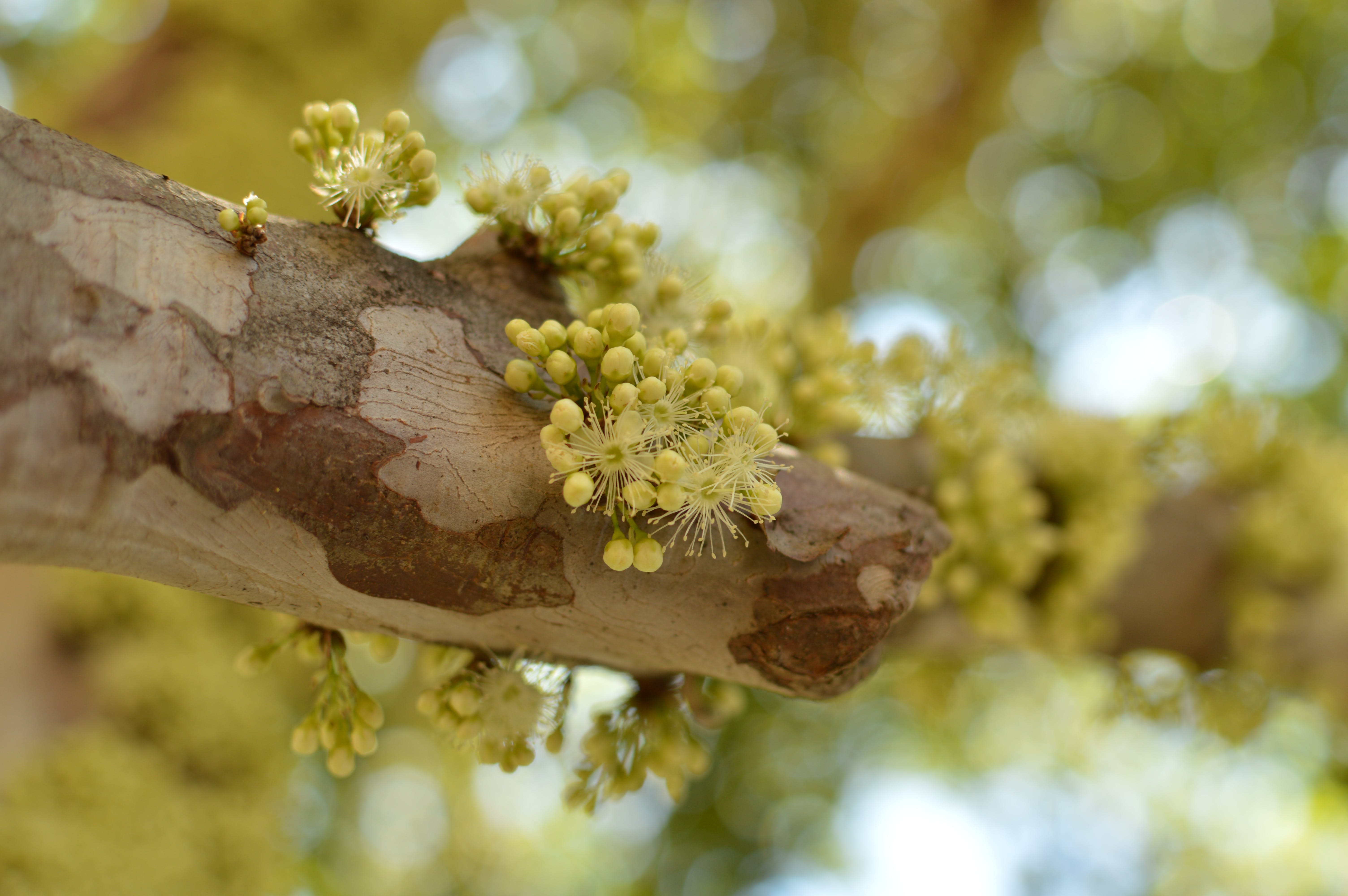 Yellow Petaled Flowers on Tree Branch