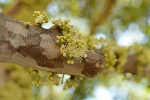 Foto d'estoc gratuïta de arbre, desenfocament, flor, flors