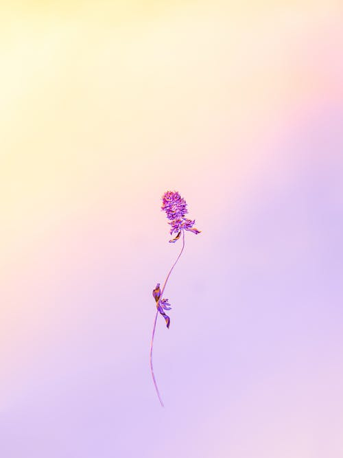 Flower With Pastel Background