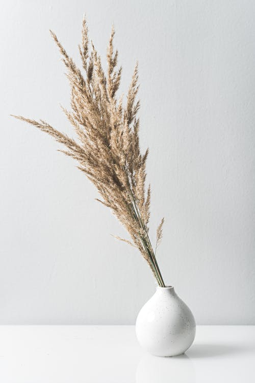 Dried Grass in a White Vase
