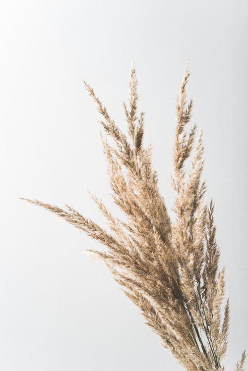 Dry golden plant bouquet with thin stems