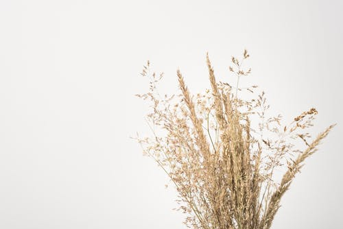 Dried plant sprigs on white background in daytime