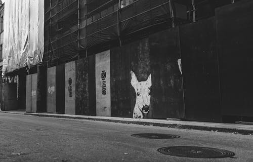 Black and white of graffiti wall with animal muzzle illustration between house under reconstruction and asphalt roadway in town
