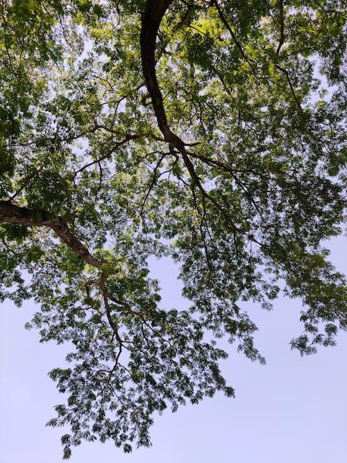 Fotos de stock gratuitas de cielo azul, fondo del árbol, perenne, tarde