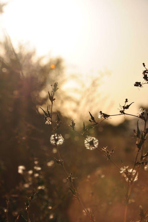 Fotos de stock gratuitas de al aire libre, botánica, botánico