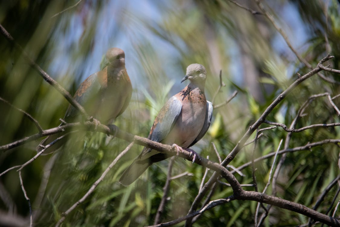 Two White and Brown Birds on Tree Branch